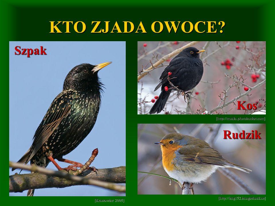 KTO ZJADA OWOCE Szpak Kos Rudzik [http://media.photobucket.com]